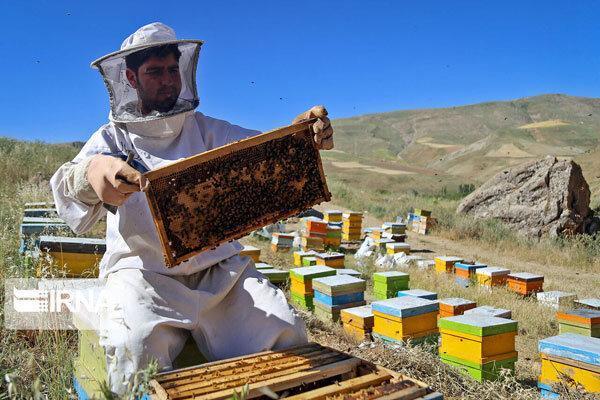 فراوری عسل در چهارمحال و بختیاری افزایش یافت